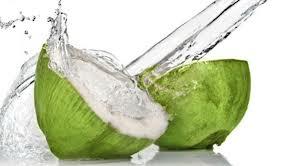 vco kelapa hijau