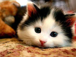 cute-cat-l